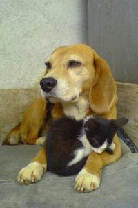 A Cat Cuddling With A Dog