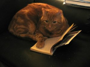 Cat in a book