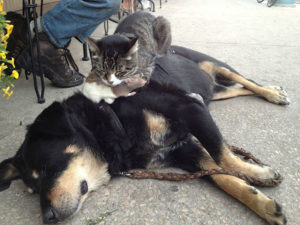 A cat sleeping on top of a dog