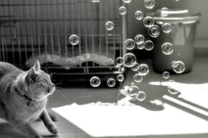 A cat looking at some bubbles in the air in this jQuery basics post.