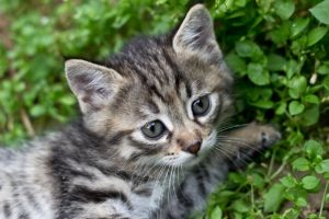 An Image of a Kitten Sitting on Grass